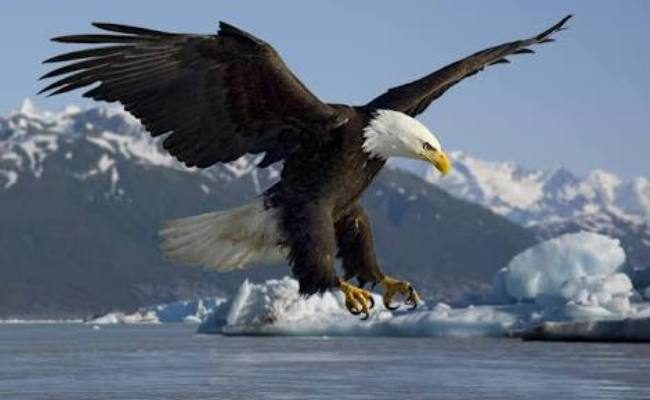 7 Great Leadership Principles To Learn From An Eagle | Botswana ...