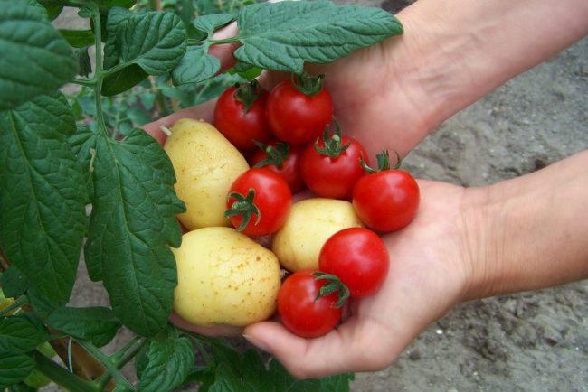 Photo of The Fresh Produce Shortage Continues To Haunt Botswana