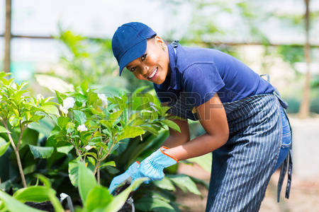 Photo of Vacancy-Garden Center Assistant Wanted At Landmark Palapye