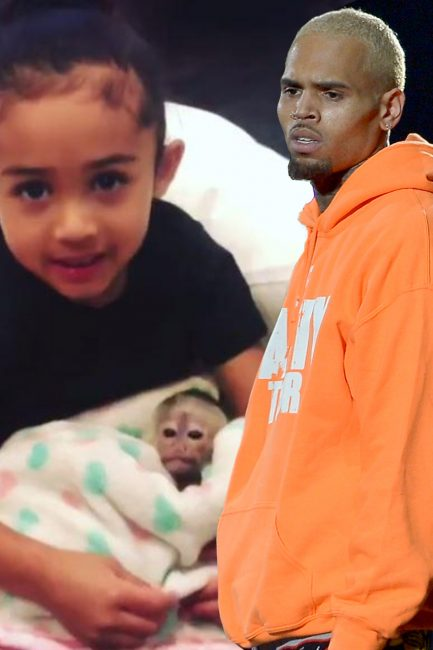 Photo of Chris Brown Could Face Jail For Keeping Pet Monkey