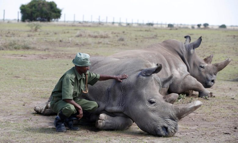 Rhinos poached